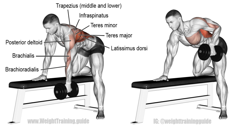 bent-over-one-arm-dumbbell-row.png